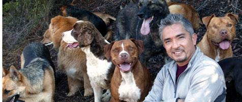 Nieuws afbeelding: Ceasar Millan Live @ Lotto Arena - the dog whisperer